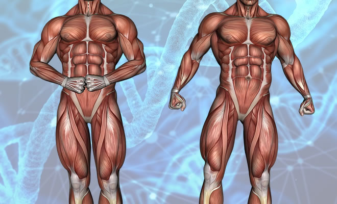 筋膜とは?リリースとは?筋膜の意味とおすすめグッズ